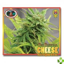 Auto cheese Feminizada 5 und