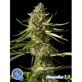 Amnesika 2.0 Feminizada 1 und