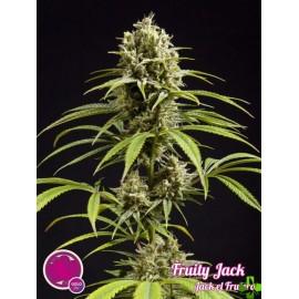 Fruity jack Feminizada 1 und