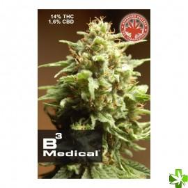 B3 medical Feminizada 1 und