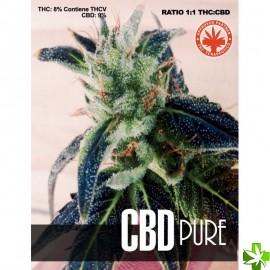 Cbd pure Feminizada 1 und