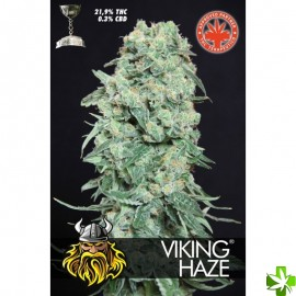 Viking haze Feminizada 1 und